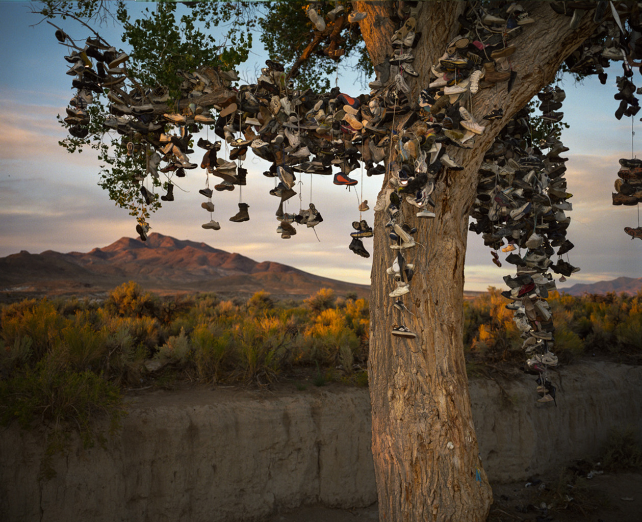 shoe tree US-50, Nevada