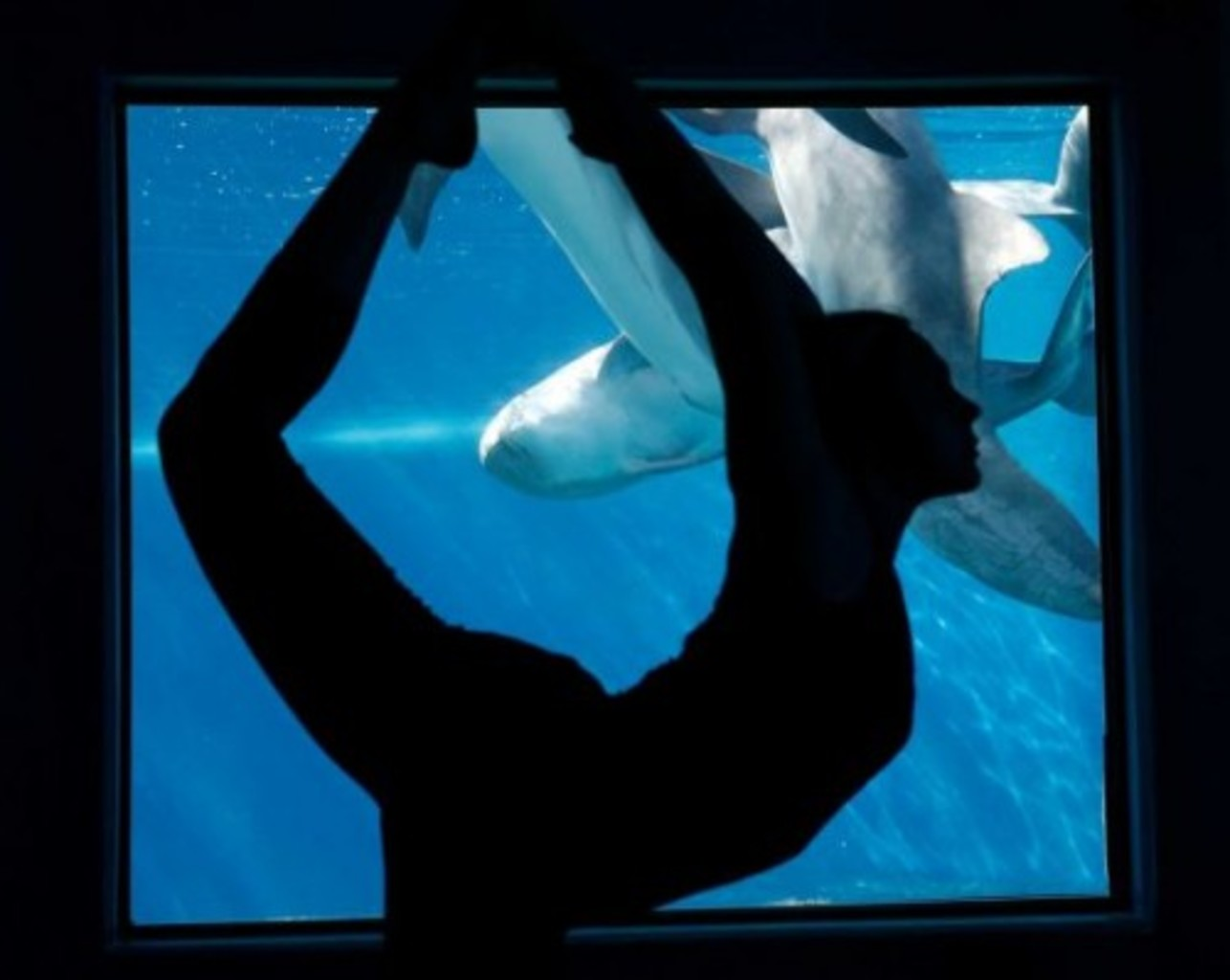 Dolphin yoga at the @Mirage is a great way to stretch out and recharge #MME16 @OracleMktgCloud
