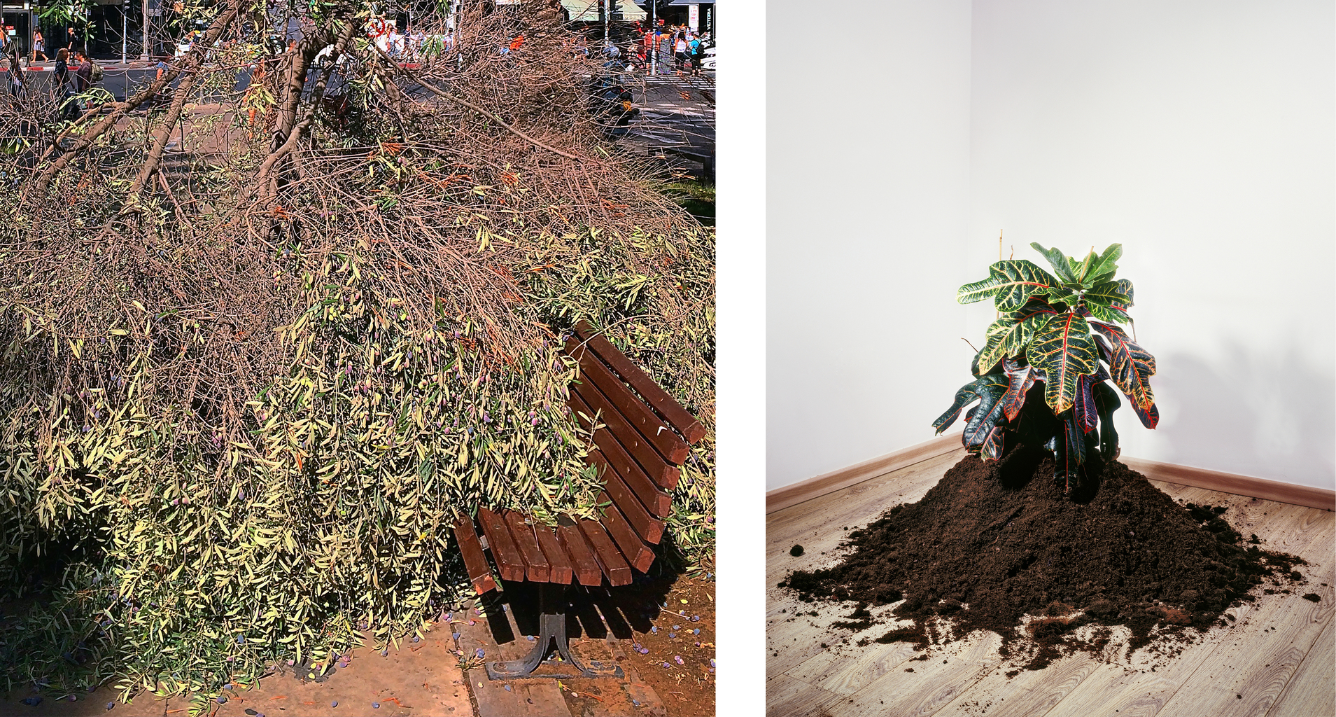 Inspiration (left image) for Plant (2008)
