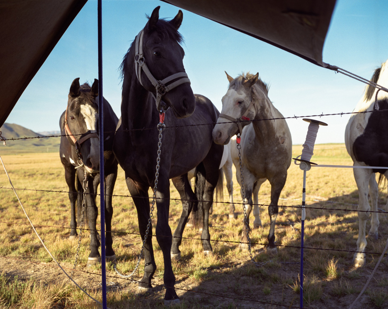 <em>horses</em> Root Camp, Idaho