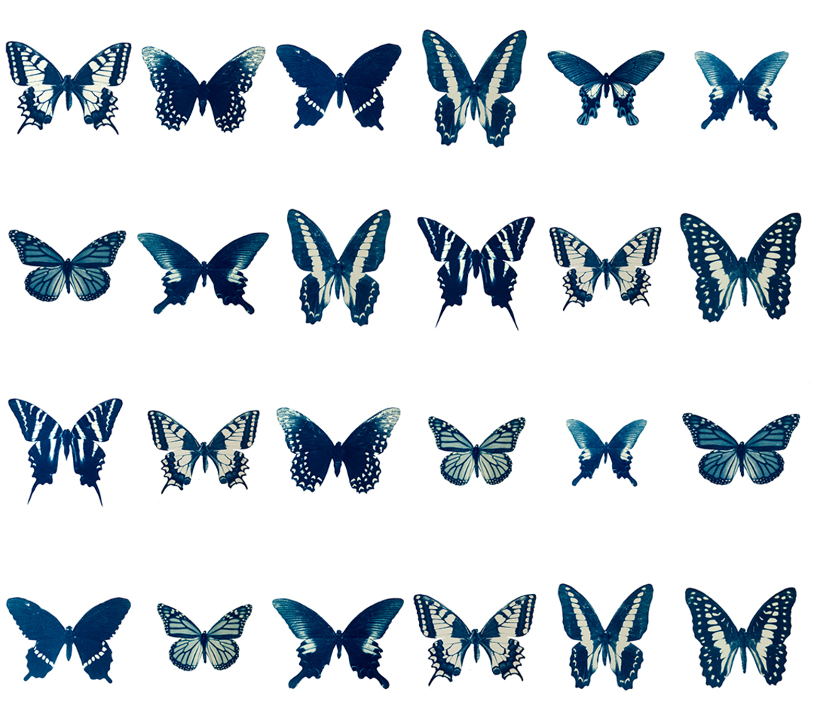 The Swarm, Cyanotype on arches water color paper, 2014