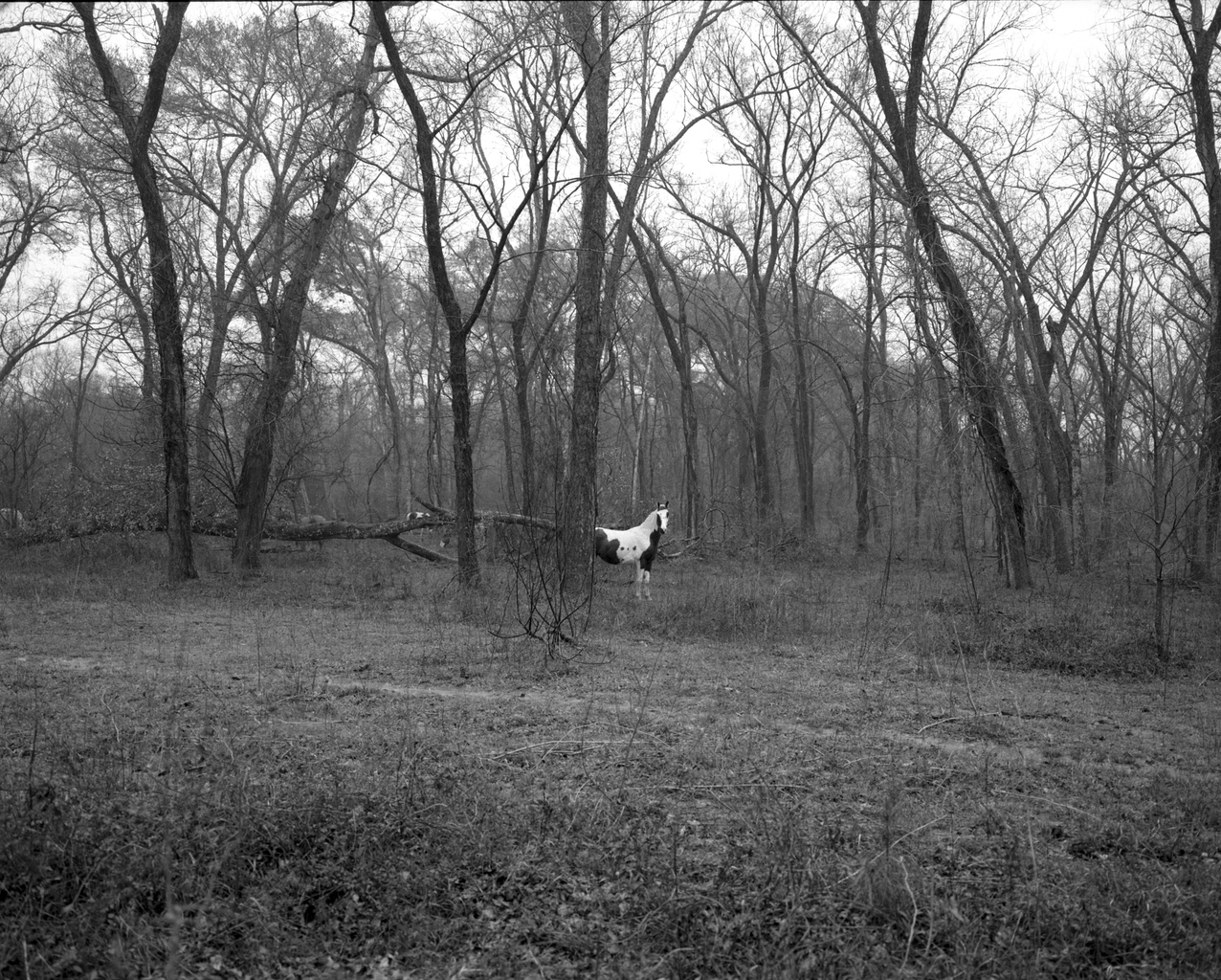 White Horse Location of the Former Town of Boonville,. Bryan,TX. 2008 © Timothy Briner
