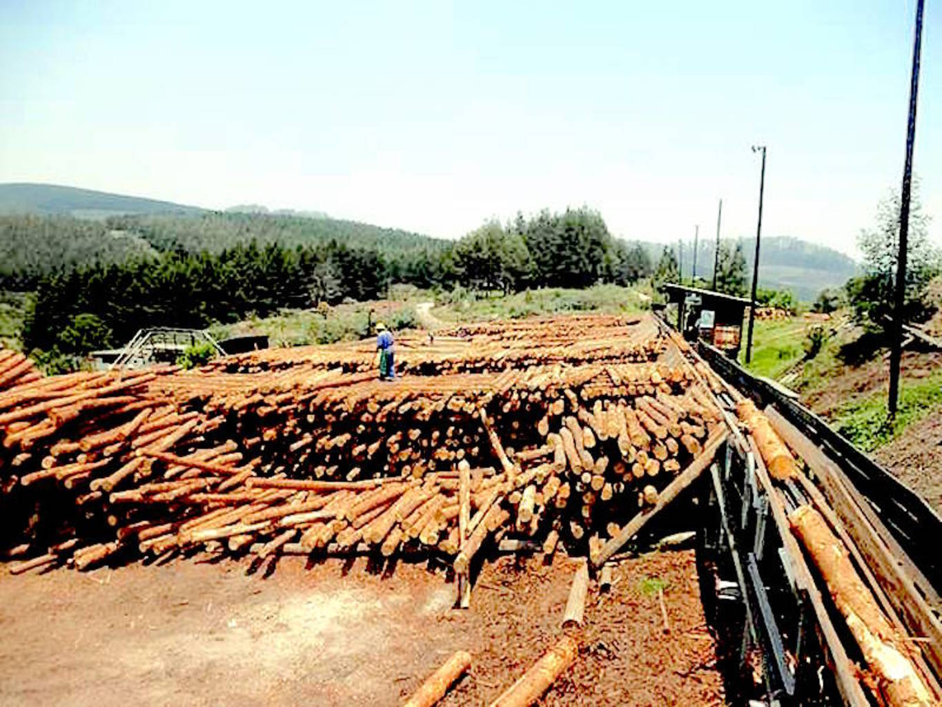 Sheba Forest Estate Sawmill in Zimbabwe.
