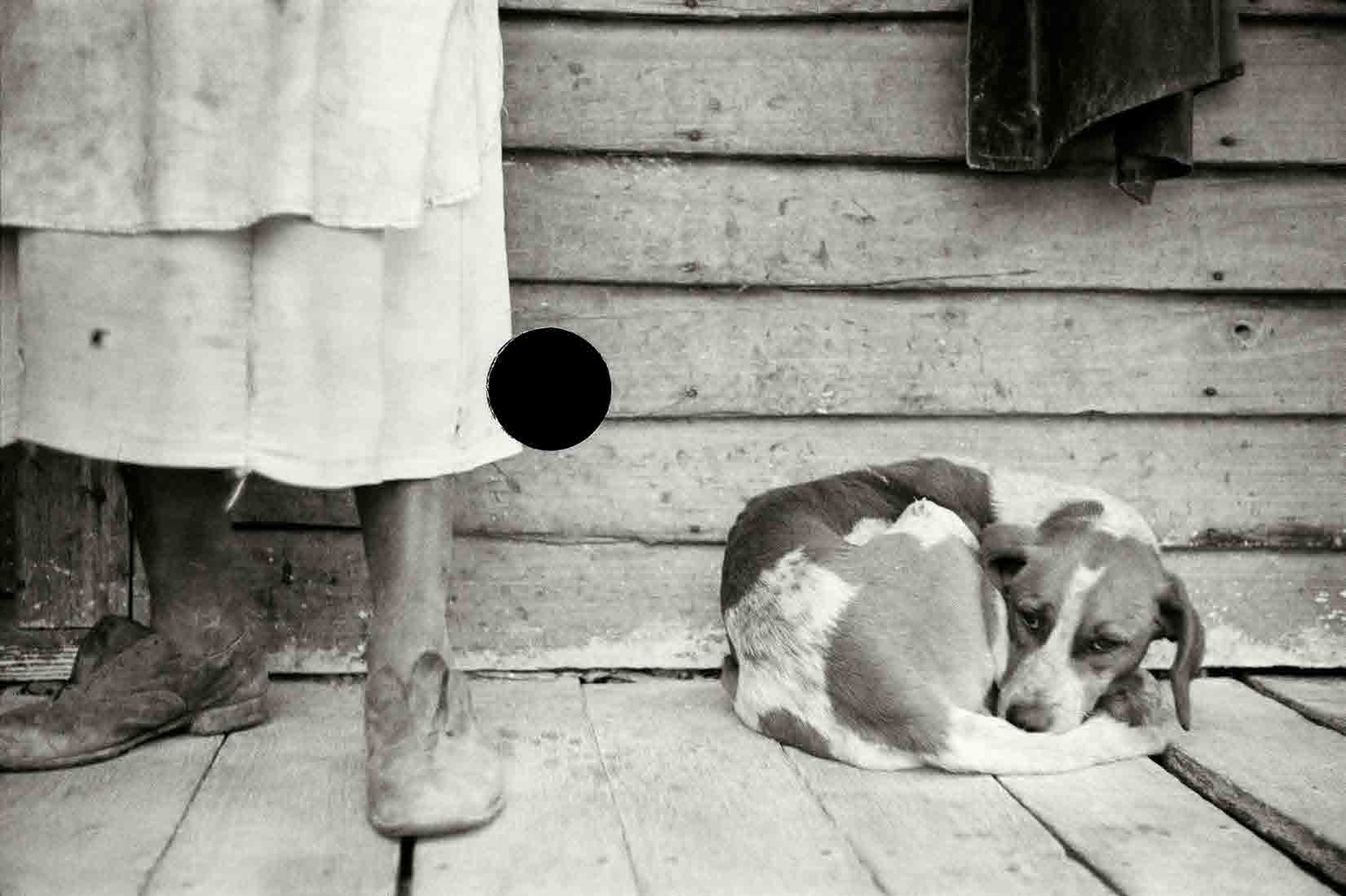 Sharecropper and dog. North Carolina. 1938. John Vachon